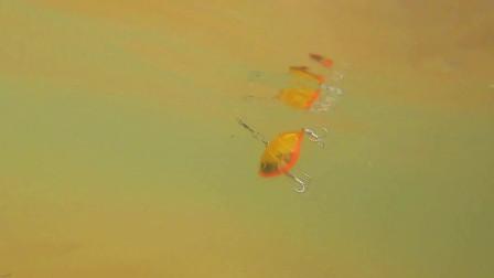 水下拍摄:泳姿摇头晃脑还带噪声的仿生假饵,诱鱼效果应该不错吧