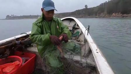 赶海大叔出海收渔网,捕获了一条名贵大猫鲨,一条就能卖好几百块