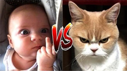 """抓拍到猫咪""""爆""""打小主人画面,网友:猫咪怕是上辈子的仇人吧"""