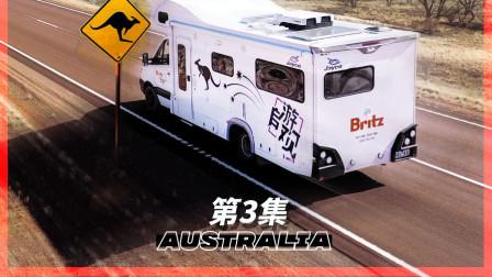 澳洲自驾小心袋鼠 一旦撞上就惨了   《自游观》澳大利亚03