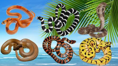 认识眼镜王蛇等6种冷血毒蛇,乐宝识动物