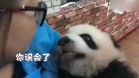 熊猫芝麻欺负弟弟妹妹遭奶妈灵魂质问
