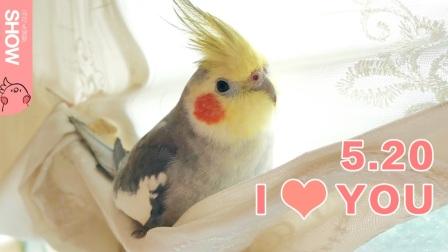 每天被小鹦鹉用ILoveYou唤醒是种什么样的感觉。