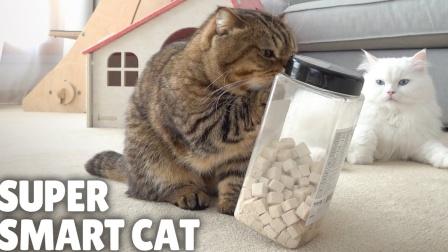 【Kittisaurus】超级聪明的猫咪!自己取出了零食!