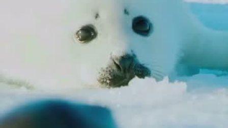 刚出生的小海豹需要妈妈温暖的怀抱