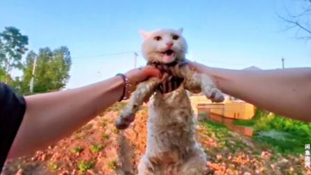 当猫猫掉入臭水沟里,隔着屏幕都能感受到铲屎官满满的绝望和嫌弃