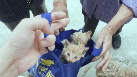 老奶奶捡到一窝小猫,用袋子装起来送到我们这里,居然全是橘猫