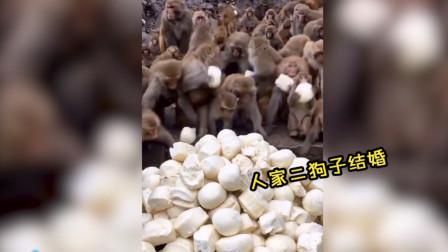 猴子都开始吃喜宴了,吃相巨难看