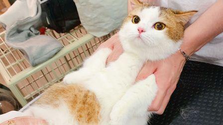 理发师:感动吗?小猫咪:不敢动不敢动……