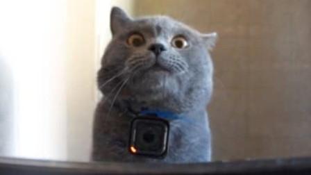给猫装上摄影机记录生活,竟拍到了这样的画面,镜头记录全过程!