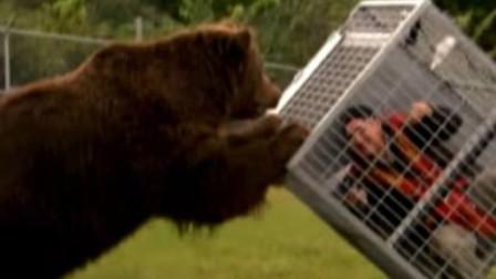 国外动物园新项目,隔着铁笼给棕熊喂炸鸡,网友:花钱找罪受!