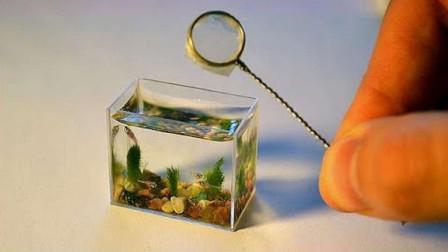 世界上最小的鱼缸,长度仅有3厘米,这里面究竟能养啥鱼