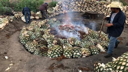 """外国农民种植""""最大果子"""",全靠它发家致富,能酿出世界名酒!"""
