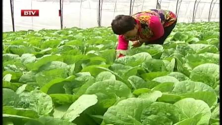 一村一品新特色  蔬菜种植助力农民致富 首都经济报道 20200526