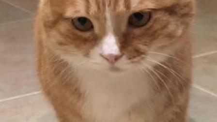你喂猫vs你妈喂猫#萌宠 你家也有这么可爱的长辈么