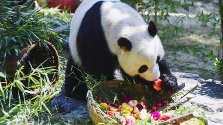 大熊猫雅吉6岁生日吃水果蛋糕、长寿面 小朋友酸了:比我都隆重!