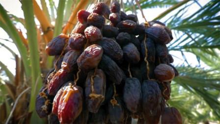 迪拜土豪最爱的零食,原来也不是稀罕物,在中国无人问津