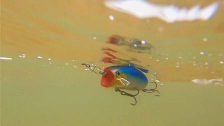 撞水小波爬的泳姿展示,可惜水面上的镜头没拍出来