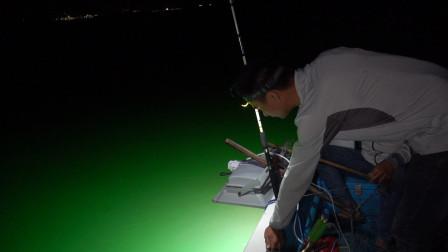 阿烽花三千买设备抓小管,刚开灯密密麻麻的海货全围上来,太多了