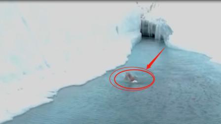 赤身在南极冰河里游泳,大神挑战记录,隔着屏幕就感觉到了过瘾