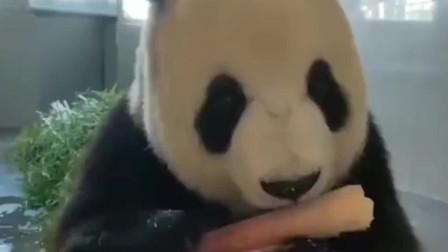 熊猫哎呀,刚才我把什么给扔了我想想,好像没有