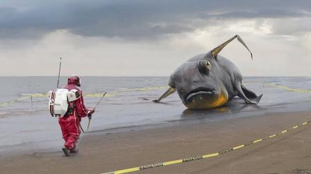 海水退去后,大鱼被搁浅在沙滩上,你们见过这种奇怪的大鱼吗?