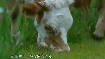 《舌尖上的中国》小鸡炖蘑菇口蘑炖鸡肉,汤汁浓郁超级美味。