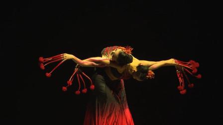 傣族长甲舞《曼珠沙华》,身体和长甲相呼应,就是好担心她们的指甲会折断
