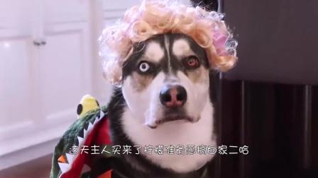 小狗被铲屎官骗喝了柠檬汁,接下来心情太魔性了,镜头记录全过程