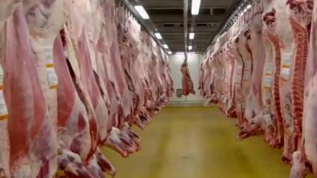 丹麦公牛现代化屠宰加工厂,看一头整牛怎样变成汉堡肉饼的!