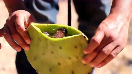 为何骆驼爱吃带刺的仙人掌?难道不怕扎嘴吗?切开后明白了