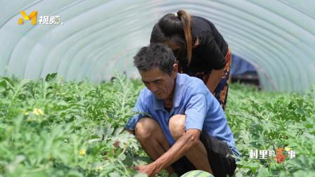 《村里的喜事》:安徽省临泉县西瓜丰收!隔屏感受摘西瓜的喜悦!