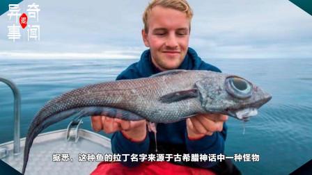 """挪威一小哥意外钓到一条""""怪兽""""鱼,像极了恐怖电影里的怪异生物!"""