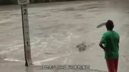 大妈河边散步却被鳄鱼盯上大妈一脱鞋啥事也没