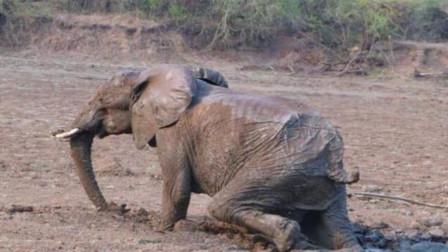大象死后,为啥很少发现它们的尸体?难不成大象墓地真的存在?