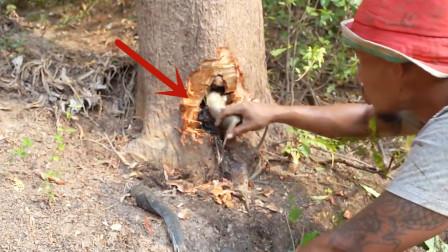 男子发现大树根部往外渗水,用斧子砍开一看,顿时高兴坏了