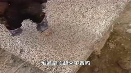 1000度的岩浆倒在史莱姆上会怎样?老外亲测,下一秒我看结果