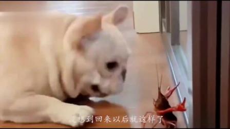 搞笑动物集锦,用饭的时候千万别看,怕你笑喷