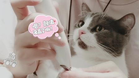 朵女士喵生第一个六一礼物--剃脚底毛,英短蓝白的确猫中二哈