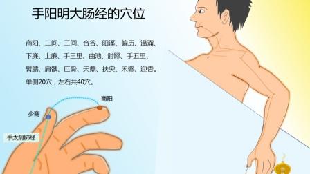 中医经络穴位全脑速记——十二正经(二)手阳明大肠经