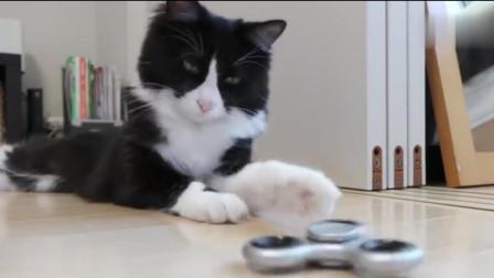 在猫咪面前玩指尖陀螺,猫主子一脸不屑:这也太小儿科了
