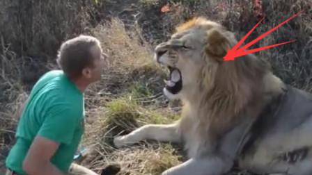 狮子死活不肯梳毛,饲养员上去就是一巴掌,下一秒忍住别笑!