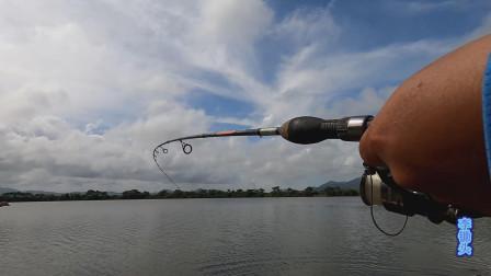 钓鱼:海边的一个闸口,10块钱钓一天,这鱼拉得才过瘾活蹦乱跳地