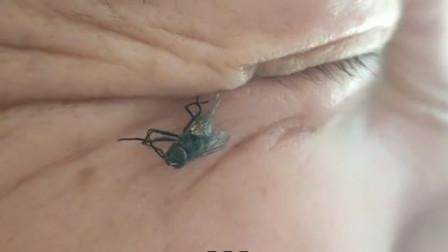 搞笑视频:都说我眼角能夹死苍蝇 今天算你倒霉