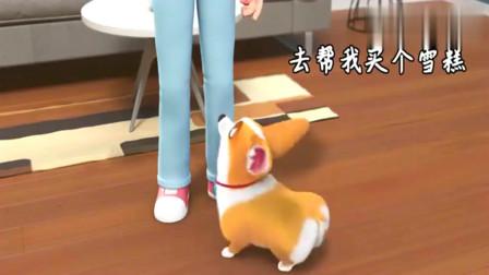 短腿小柯基:小短腿你要不要这么搞笑,不要把你的喜好给主人好吗