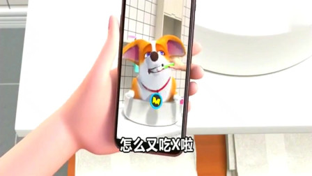短腿小柯基:小主人完美诠释一秒变脸,狗子还一脸懵呢!