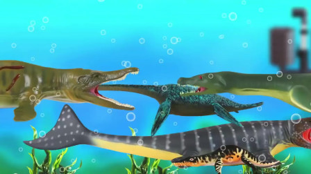 认识水中游的恐鳄蛇龙和苍龙 海洋动漫