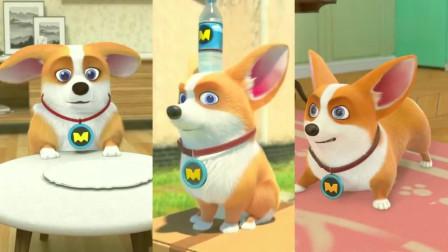 飞狗MOCO:调皮的飞狗,全靠演技!