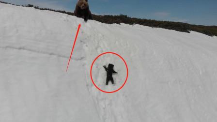 熊妈妈亲手将小熊推下雪山,画面十分惊险,人们纷纷指责!