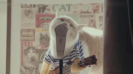 特地为猫咪准备的出道视频,能不能C为出道就靠你们了